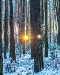 5 rzeczy, które możesz robić u nas zimą